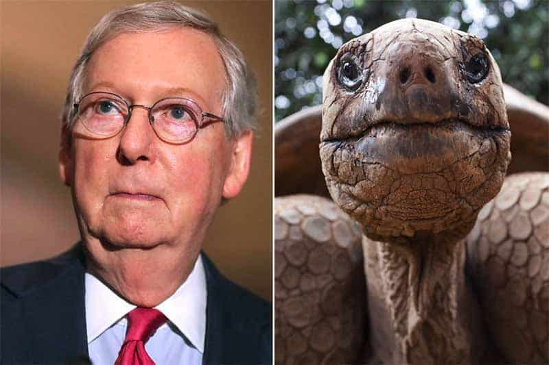 Mitch turtle